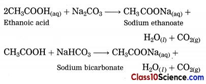 Carbon Compounds Science Notes 13