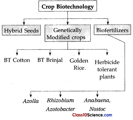 Cell Biology and Biotechnology Science Notes 3