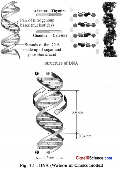Heredity and Evolution Science Notes 1