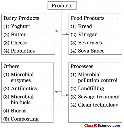 Introduction to Microbiology Science Notes