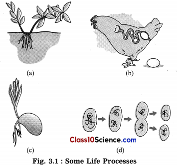 Life Processes in Living Organisms Science Notes 4